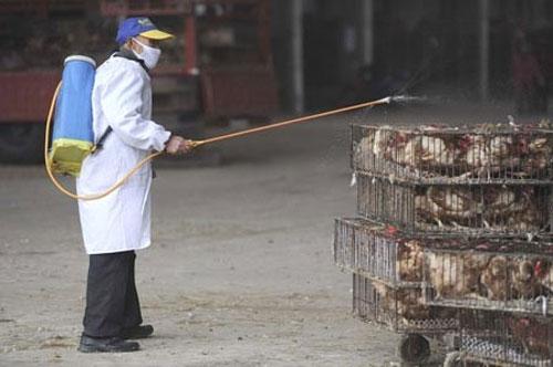 Cúm H5N1 chết người có nguy cơ bùng phát vào mùa đông - 1