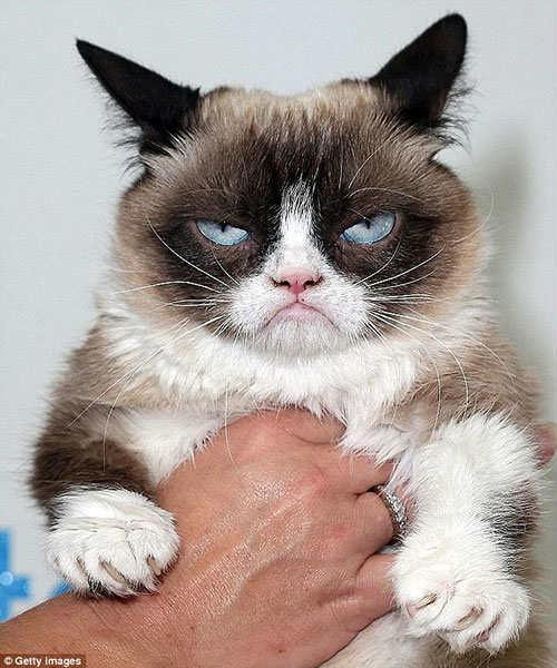 """Chú mèo có thu nhập """"khổng lồ"""" 2 nghìn tỷ đồng - 1"""