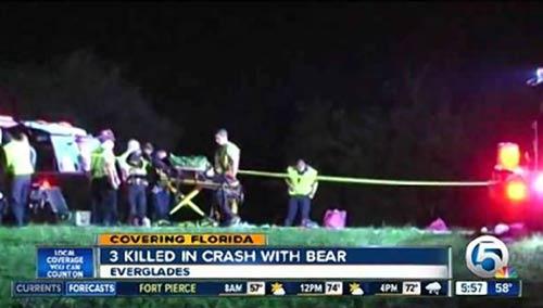 Mỹ: Tông xe vào gấu, 3 người chết và 8 người bị thương - 1