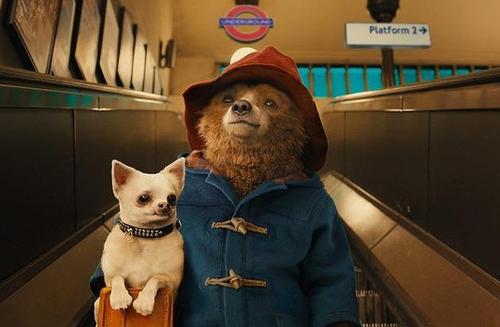 """Phim """"Gấu Paddington"""" khiến khán giả Âu - Úc phấn khích - 1"""