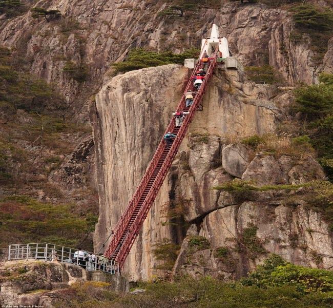 Cây cầu trông như chiếc thang khổng lồ trong vườn quốc gia ở tỉnh Daedunsan, Hàn Quốc.