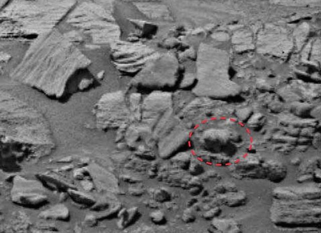Phát hiện gấu con đi trên sao Hỏa - 1