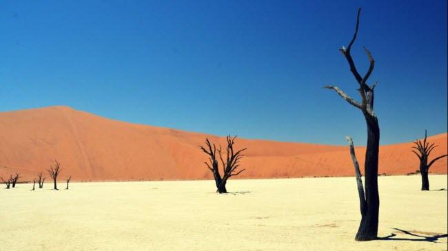 Đầm lầy chết (Deadvlei) nằm trong vườn quốc gia Namib-Naukluft ở Namibia. Đây là từng là cánh rừng xanh tốt cách đây 900 năm. Hiện vẫn còn một số cây chết khô đen nằm giữa đầm lầy khô cằn.