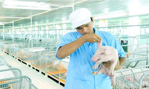 Có hay không nguồn thực phẩm sạch từ doanh nghiệp trong nước? - 1