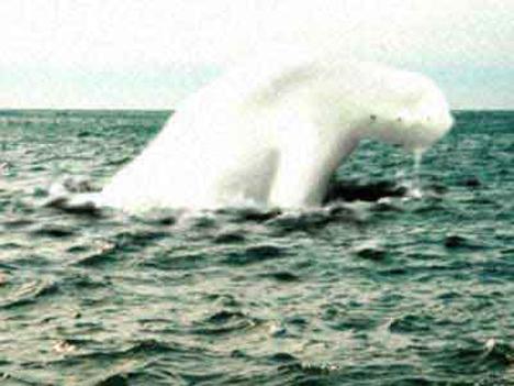 Quái vật cao 30 mét hình dạng giống người ở Nam Cực - 1