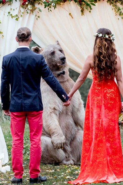 Cặp đôi Nga chụp ảnh cưới cùng gấu nâu khổng lồ - 1