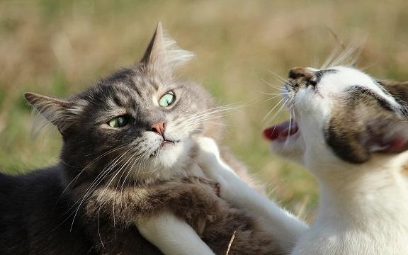 Người phụ nữ để 14 con mèo ăn thịt lẫn nhau ở nhà - 1