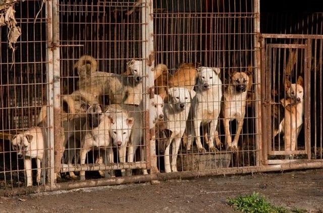 Khám phá thủ phủ thịt chó đầy tai tiếng ở Hàn Quốc - 1