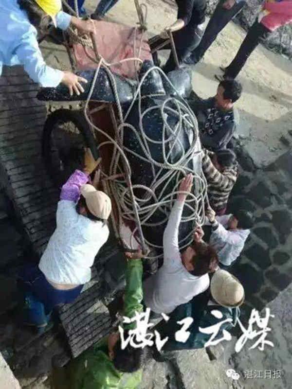Rùa biển quý hiếm nặng 4 tạ bị dân Trung Quốc xẻ thịt - 1