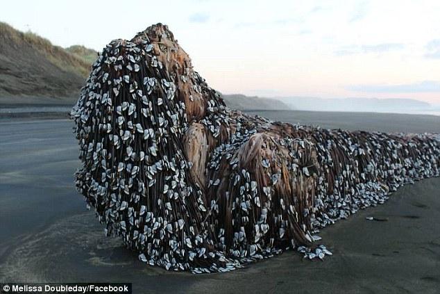 Vật thể khổng lồ bí ẩn dạt vào bờ biển New Zealand - 1