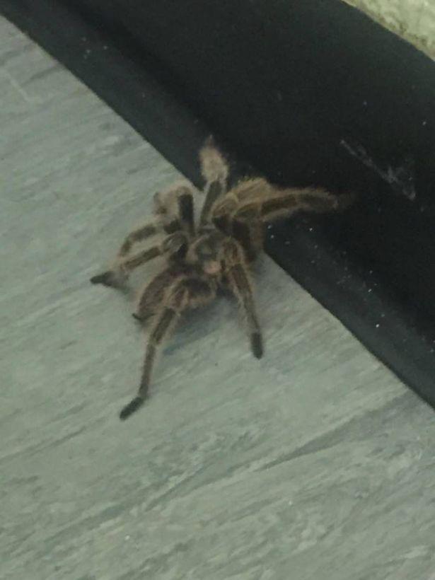 Đang đi vệ sinh bỗng thấy nhện khổng lồ lừ lừ bò tới - 1