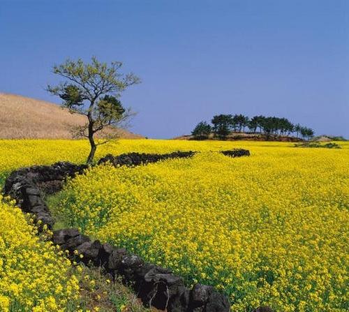 7 địa danh nổi tiếng ở Hàn Quốc đẹp đến say lòng - 3