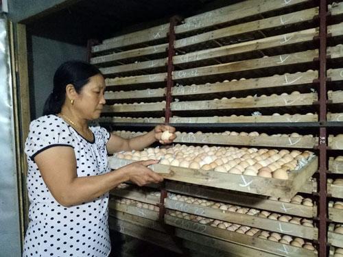 Làm giàu ở nông thôn: Từ 2.000 con gà vốn mà thành tỷ phú - 3