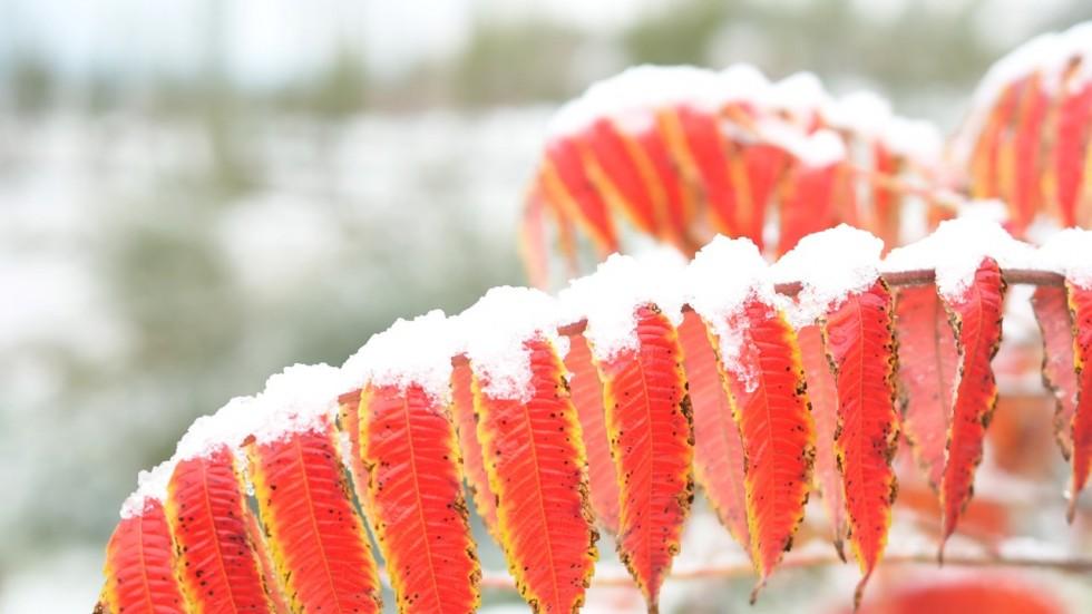 Bất thường: Tuyết rơi dày trên phố TQ giữa mùa thu - 1