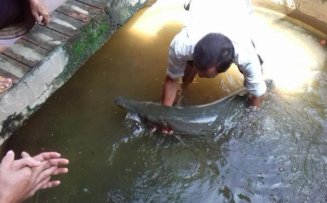 Hoảng hốt phát hiện cá sấu bơi vào nhà trong mưa lụt - 1