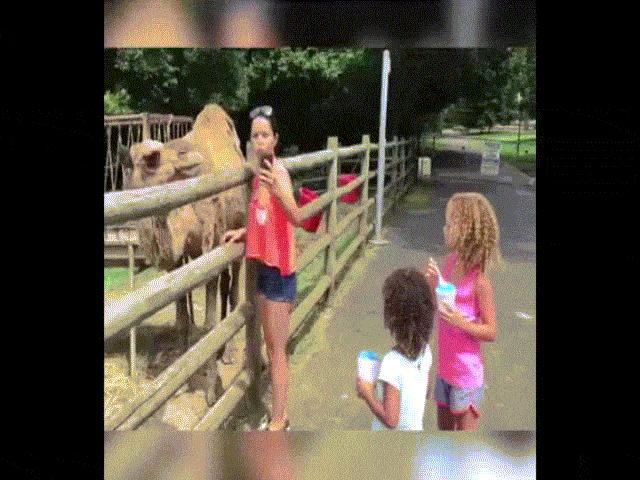 """Đừng quá """"nhẹ dạ cả tin"""" với đám động vật"""