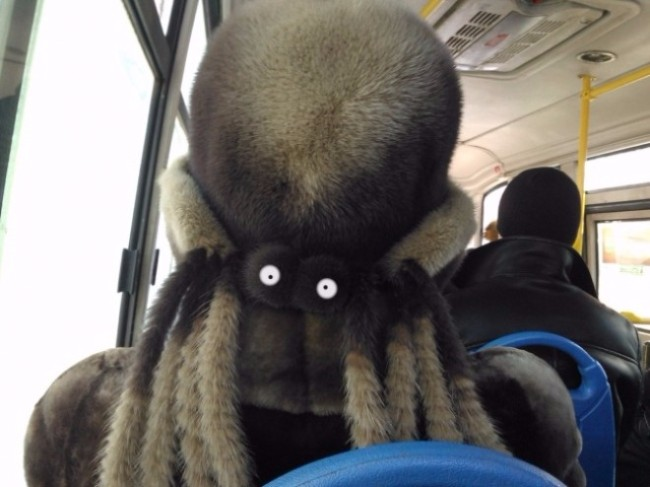 Bạn đang thấy một chú bạch tuộc lớn trên xe buýt?