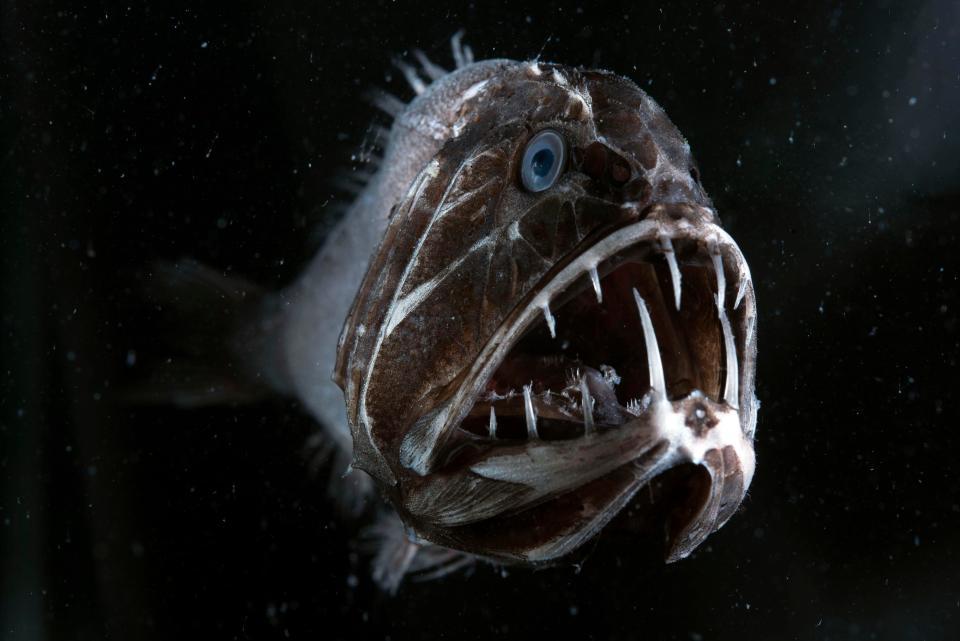 """Thả camera xuống đại dương, phát hiện hàng loạt """"thủy quái"""" kinh dị - 1"""