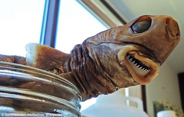 Bị cá mập siêu hiếm cắn, bé trai chịu vết thương kỳ lạ - 1
