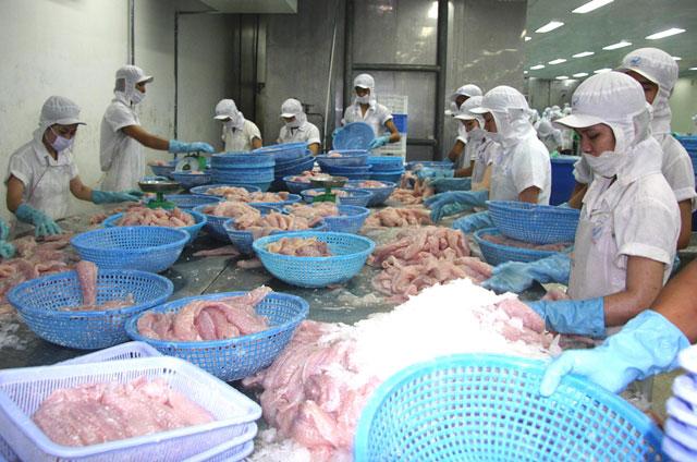 Kỷ lục: Giá cá tra lên tới 30.000 đồng/kg, nông dân lãi khá - 1