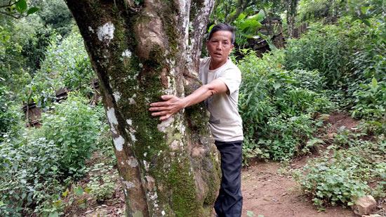 """Nông dân làm giàu: Có tiền tiêu đều đều từ 300 gốc cây """"bất tử"""" - 1"""