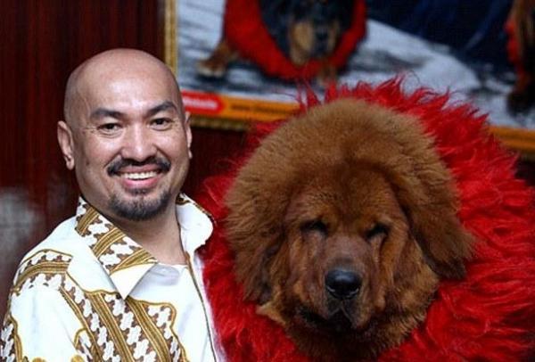 TQ: Sự thảm hại của những chú chó ngao Tây Tạng triệu đô một thời - 1