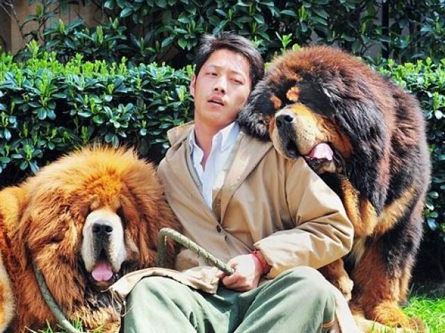 Từ chó ngao Tây Tạng 30 tỉ đồng tới món ăn trong nồi lẩu