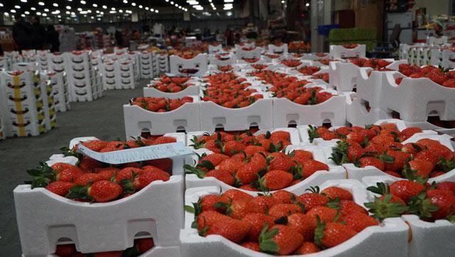 Đi chợ đấu giá rau, khoai, dâu tây ở xứ Hàn giữa trời âm 4 độ C - 1