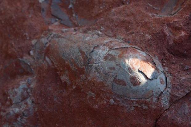 Phát hiện ổ 20 trứng khủng long 130 triệu năm nguyên vẹn ở TQ - 1