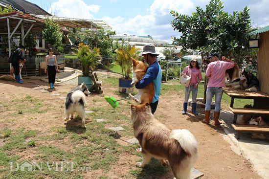 Mới 24 tuổi, 9X Đà Lạt đã sở hữu trang trại chó quý hàng tỷ đồng - 1
