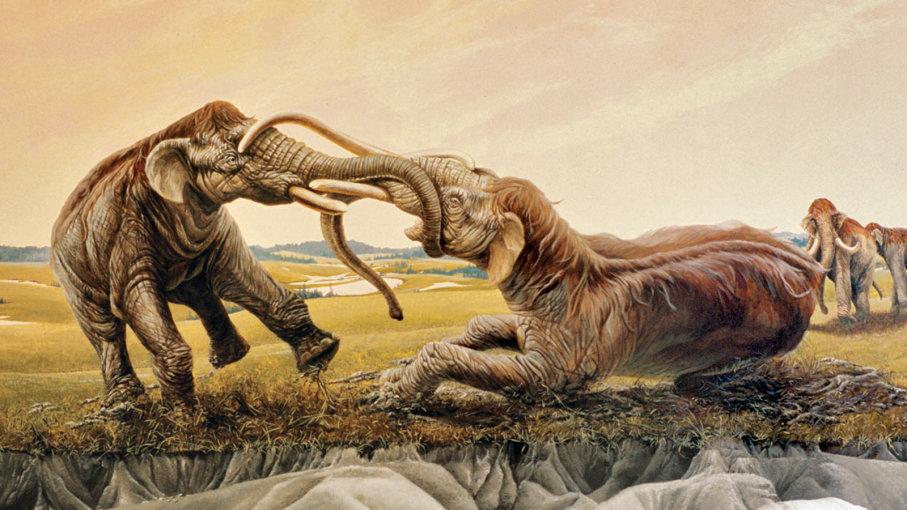 Trận chiến kinh hồn của hai voi ma mút, sừng cắm vào nhau 120 thế kỷ - 1