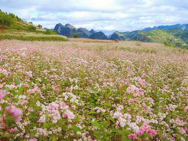 October, don't miss an appointment with the Ha Giang Triangle Festival