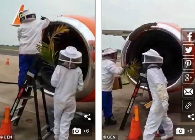 20.000 con ong khiến 3 chuyến bay không cất cánh được - 1