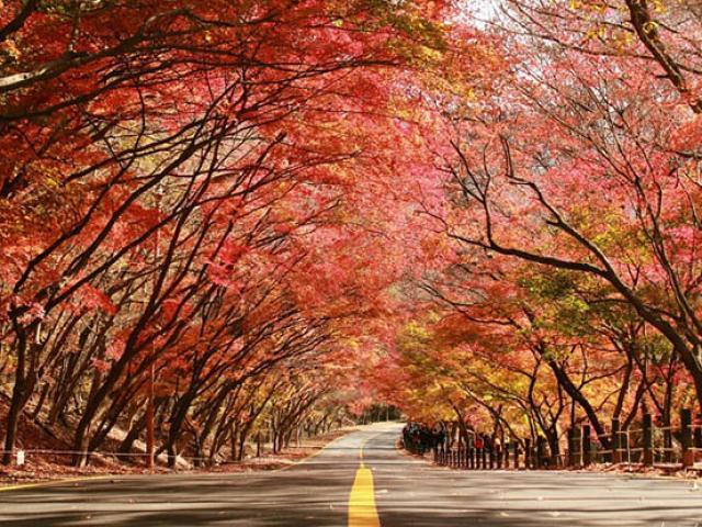 Những con đường mùa thu nổi tiếng tại Hàn Quốc, Nhật Bản