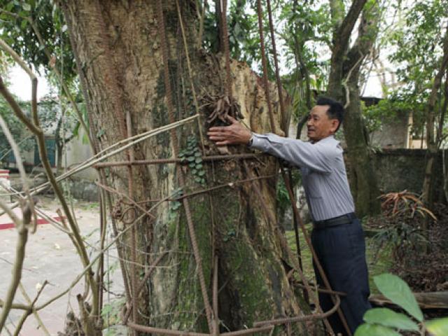 Hà Nội đồng ý cho người dân bán cây sưa từng được trả giá 100 tỷ đồng