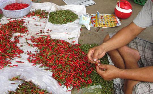 Malaysia bất ngờ dừng nhập khẩu ớt từ Việt Nam - 1