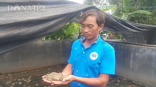 Ninh Bình: 8X mỗi năm kiếm gần nửa tỷ đồng nhờ nuôi ếch ộp - 1
