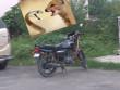 """Video: Cầy măng-gút """"tử chiến"""" rắn dài gần 1 mét trên xe côn tay"""