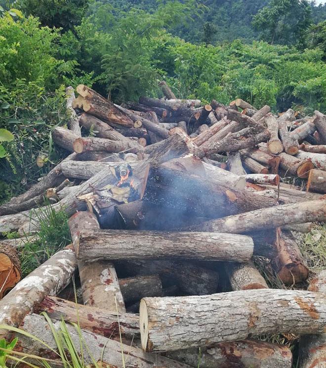 Cán bộ kiểm lâm tại Đắk Lắk bị tưới xăng đốt khi đang làm nhiệm vụ - 1