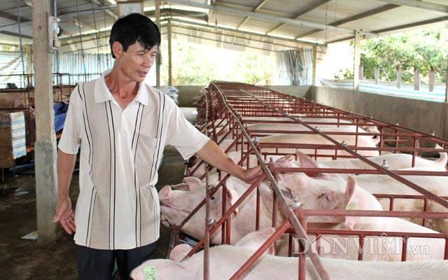 Cục Chăn nuôi: Phải giảm giá lợn hơi, dù nhiều người không đồng ý - 1