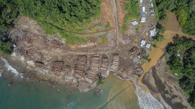 """Quốc gia sắp mất sạch rừng vì công ty Trung Quốc """"càn quét"""" - 1"""