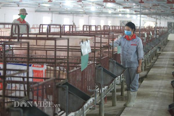 Giá heo hơi hôm nay 21/10: Thận trọng tái đàn vụ Tết do giá lợn hơi đang giảm - 1