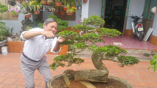 """""""Phát sốt"""" với """"cụ"""" duối lùn dáng long, giá 100 triệu ở Ninh Bình - 1"""