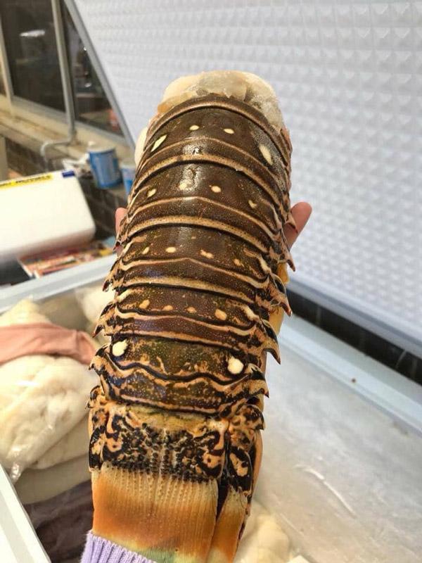 Người Việt chi cả vài triệu đồng để mua đuôi con vật này - 1