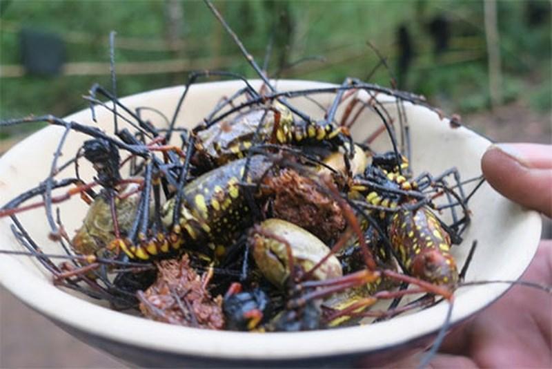 Đặc sản nhện rừng của đồng bào Raglai Phan Dũng - 1