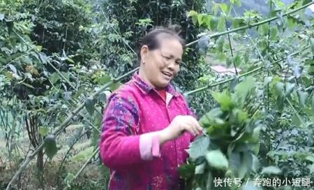 Rau dại mọc đầy ở Việt Nam lại có giá 268.000 VNĐ/kg ở nơi này - 1