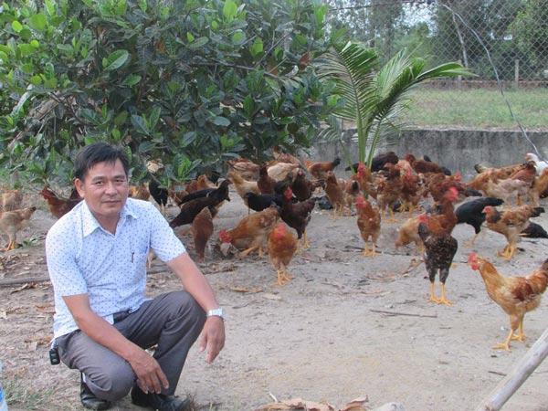 """""""Học mót"""" nuôi gà lai thả vườn """"đẻ"""" 100 triệu đồng/năm - 1"""