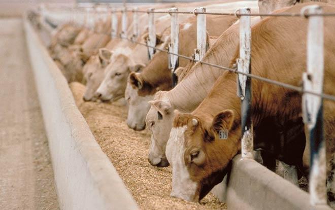 """Top 10 lý do giải thích tại sao các bà nội trợ """"đổ xô"""" tìm mua thịt bò Canada - 1"""