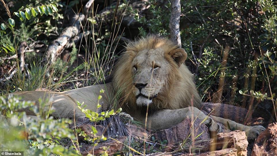 Bạn có dám ăn ngủ cùng thú hoang tại công viên hoang dã này? - 1