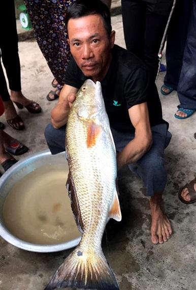 Cá vàng óng ánh nặng 5kg mắc câu ngư dân - 1